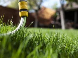 grönt gräs och vattenslang. ett hus och en trädgård. oklippt gräs foto