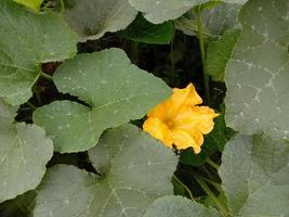 flaskvakt blad närbild på gården foto