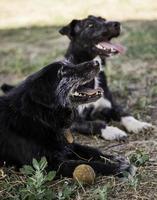 hund med boll att spela foto