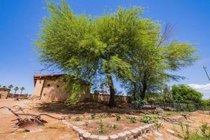 solig utsikt över trädgården i gamla Las Vegas Mormon Fort State Historic Park foto