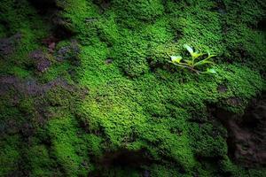 grönt gräs i cementblockbakgrund och textur foto