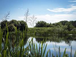 sjö och vegetation vid tophill låg naturreservat yorkshire england foto