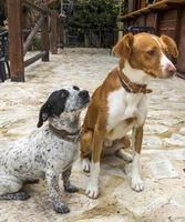 två hundar vänner för alltid foto