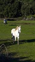 häst i höstfältet foto