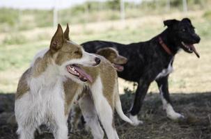 övergivna hundar ledsna foto