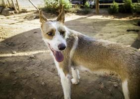 övergivna hundar husdjur foto