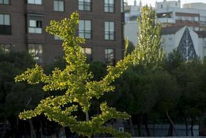 litet träd på hösten på stadsbakgrund foto