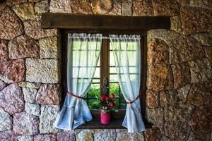 fönster med blommor foto