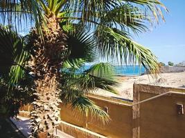 vacker grön palm i Hurghada, Egypten foto