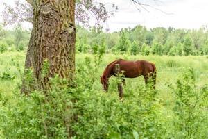 vackra välskötta hästar betar på selenäng med saftigt grönt gräs foto
