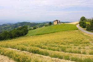 landskap av fält i Italien foto