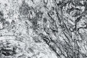 närbild av en bark av ett träd foto