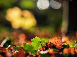 soligt väder i skogen foto