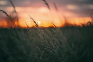 lugnt solnedgångsljus foto