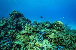 undervattensscen med korallrev och fisk. foto