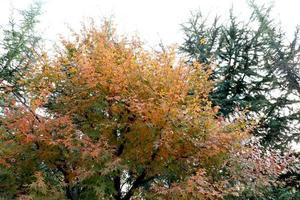 naturen på hösten foto
