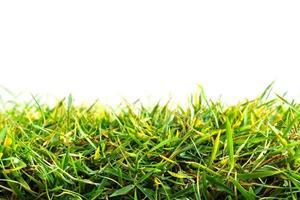 grönt gräs isolerad på vit bakgrund foto