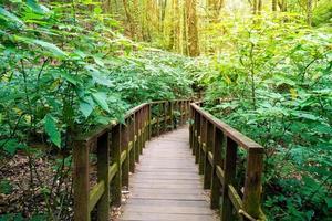 träbro i skogen på kew mae pan natur spår, Chiang Mai, Thailand foto