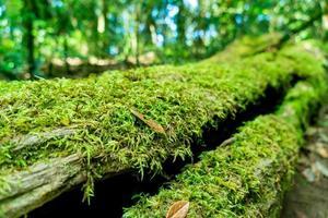 närbild grön mossa på träd i skogen foto