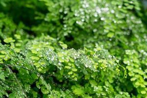 grönt blad med droppar vatten foto