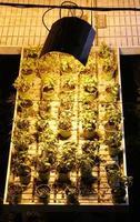 basilikadyrkning med artificiellt ledt ljus foto