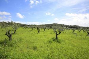 det gröna och lantliga inlandet av porquerollesön foto