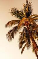 kokospalmer med tom himmel och kopieringsutrymme foto