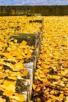 höstsäsong. färgglada fallna löv i park. vacker höstväg. foto