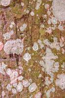 träd bark textur för bakgrund foto