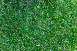 textur för grönt gräs för bakgrund foto