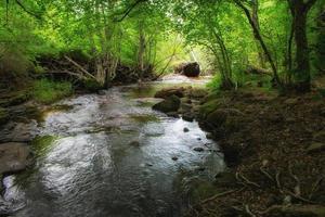 floden korsar en vacker förtrollad skog foto