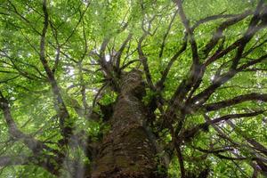 magisk scen av solstrålar som kommer in genom grenarna på ett robust träd foto