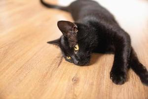 svart katt med gula ögon ligger på sidan, benen utsträckta foto