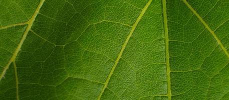 grönt druvablad närbild makro konsistens foto