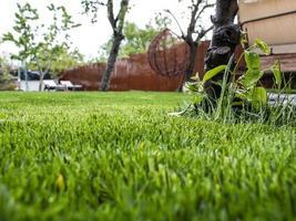 grönt gräs på gården. ett hus och en trädgård. gräsmatta foto