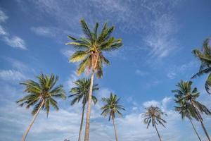 kokospalmer med blå himmel foto
