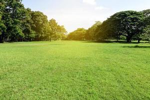 grön park. naturvy av grönt gräs i trädgården. ekologikoncept foto