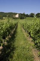 vingårdar i Lot Valley, Lot Province, Frankrike foto