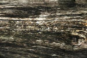 närbild vackra träd bark konsistens foto