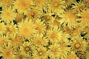närbild vackra blommor detaljer natur foto