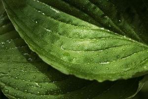 närbild gröna blad natur foto