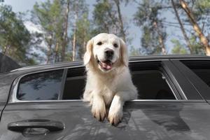 söt hund utomhus. söt smiley hund utomhus foto