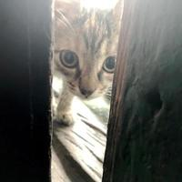 rolig söt randig korthår kattunge, vacker katt sitter av leende foto