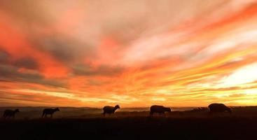 en galen solnedgång i Sydafrika, utsikt över Sydafrika foto