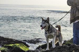hund på stranden - newport ca 2018 foto