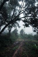 väg i en tropisk skog, vägen in i den tropiska fuktiga skogen foto