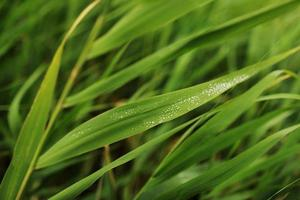 närbild av ett blad och vattendroppar på det bakgrund. vattendroppar på den foto