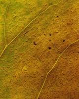 naturlig växt lämnar makro foto