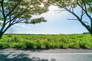 asfaltväg i skog - öka färgbearbetningsstil med solflammande effekt foto