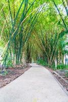 gångväg med bambu trädgård i park foto